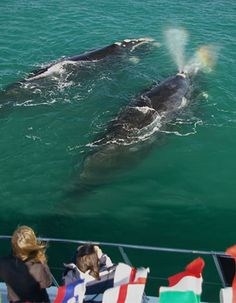 Southern Right Charters (Hermanus). Experience a close encounter with the gentle giants of the ocean by joining us on an informative and educational whale watching trip. Close Encounters, Gentle Giant, Whale Watching, Marine Life, South Africa, Attraction, Tourism, Southern, Boat