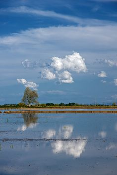 """""""Riso e nuvole II"""" by Santo Algieri"""