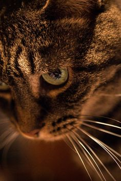 Submission by Kody Hogan. Check out Kody's profile: https://www.pexels.com/u/kody-hogan-327726/ #animal #pet #cute