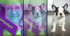 What would you look like as a puppy? This Is My Story, Puppy Eyes, You Look Like, Four Legged, French Bulldog, Puppies, Dogs, Pictures, Animals