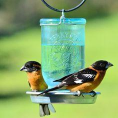 Amazon.com : Perky-Pet Mason Jar Wild Bird Waterer 783 : Wild Bird Feeders : Patio, Lawn & Garden