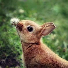 your smile is like a baby bunny sniffing a tiny flower.