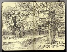 Ian Sidaway Fine Line Nature is my springboard. From her I get my initial impetus. Artist Journal, Artist Sketchbook, Sketchbook Pages, Drawing Sketches, Art Drawings, Tree Sketches, In Natura, Landscape Drawings, Landscapes