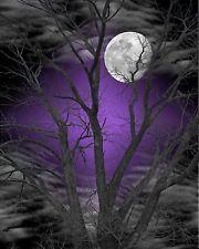 Purple Gray /Tree Moon