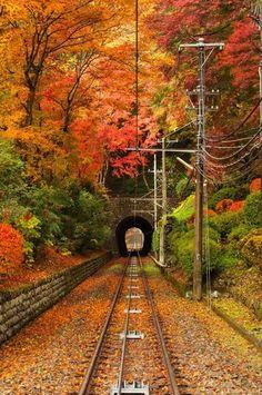 都心から電車で1時間ほどで行くことができる大自然「高尾山」は、もちろん紅葉を存分に楽しむことができます。ケーブルカーで通り抜ける鮮やかなトンネルは、高尾山ならでは!
