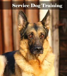 Is your dog right for service dog training? Take a look at a few basic factors that you need to know, then find out how to get started,