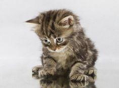hello god it's me margaret :-)? kitten
