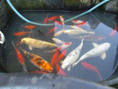 my fish pond