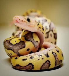 It's A Snake Blog!