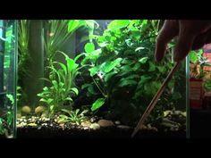 ▶ Aquarium Plants for Beginners - YouTube