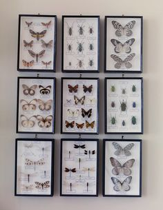 We always have a large and colorful collection of butterfly art available in our Raleigh NC store. Taxidermy Decor, Style Deco, Butterfly Frame, Gothic House, Box Art, Oeuvre D'art, Decoration, Gallery Wall, Diy Crafts