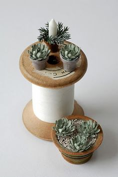 miniature: succulents & fir - piantine grasse....