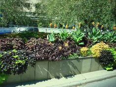 Toronto Summer. Toronto, Real Estate, Garden, Plants, Summer, Garten, Summer Time, Real Estates, Lawn And Garden