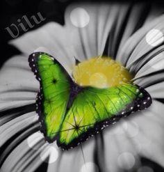 Green Butterflie - Virginia Lucia Campos Mendonça