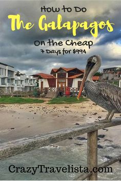 Solo Travel to The Galapagos on the Cheap (ish): How I Did 7 Days/Nights for $994, Including Flights!