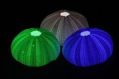 LEDs urchin lamps