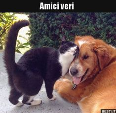 Cute cats and kittens Animals And Pets, Baby Animals, Funny Animals, Cute Animals, Cute Cats, Funny Cats, Amor Animal, Image Chat, Photo Chat
