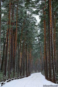 My hike and bike trail in Helsinki, Finland! Cool! Photo: Niklas Sjöblom