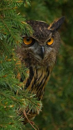 Owl Photos, Owl Pictures, Nature Pictures, House Photography, Animal Photography, Nature Photography, Photography Ideas, Beautiful Birds, Animals Beautiful
