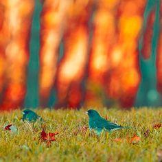 http://www.etsy.com/treasury/MTI4NTAwNTd8MjA3MDYyNjI1NQ/feed-the-birds?index=2498