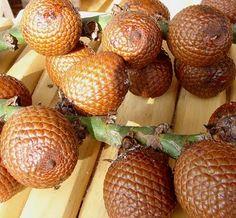 O fruto da Palmeira Buriti.
