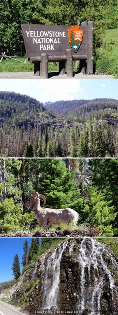 Road trip 2014 - Yellowstone or bust - the east gate