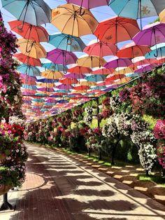 Dubai Miracle Garden - the umbrellas would be amazing for a garden party!