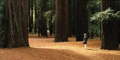 Muir Woods and Sausalito Tour | Go Select San Francisco Oooooo Redwoods!