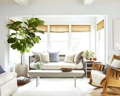 Are the Best Indoor Trees for Every Room of Your House From fig trees to palm trees, these large indoor plants will make your home feel like paradise.From fig trees to palm trees, these large indoor plants will make your home feel like paradise. Best Indoor Trees, Large Indoor Plants, Indoor Palms, Indoor Flowers, Potted Plants, Connecticut, Home Sitting, Living Room Plants, Living Rooms