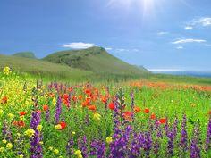 альпийские цветы кавказа - Поиск в Google