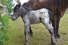 newborn stallion