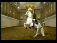 Lipizzaners ~ Halo Classical beauty from the Spanish Riding School of Vienna.Also at http://www.vimeo.com/12161430 Music from Beyonce.