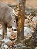 Deer Hunting Tips - Whitetailsinsight.com