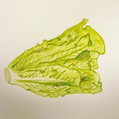 A little late but got my painting done for today. #worldwatercolorgroup #watercolor #lettuce #danielsmithpaint