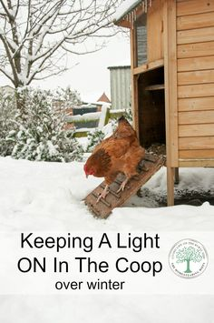 Make one special photo charms for your pets, compatible with your Pandora bracelets. How to Care for Chickens in the Winter- Winter is creeping in! Take these extra measures to keep your chickens safe and warm through the cold months ahead. Backyard Chicken Coops, Chicken Coop Plans, Building A Chicken Coop, Diy Chicken Coop, Backyard Farming, Chickens Backyard, Chicken Coop Winter, Backyard Coop, Backyard Ducks