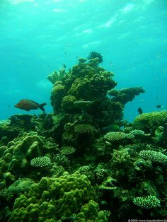 Great Barrier Reef, Australia- I want to go to here... And use my scuba certification