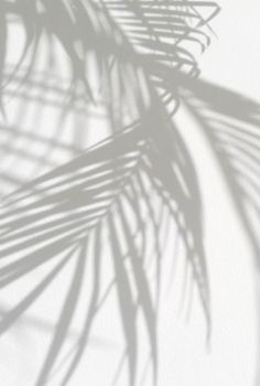 Shadows on walls.