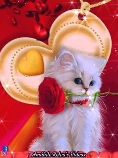 Letter To Best Friend, Good Night Blessings, Cute Animal Photos, Best Friends, Cute Animals, Blessed, God, Videos, Good Music