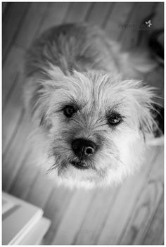 Naperville Family Photographer   Lifestyle Photography   Pet Portrait   Dog Photography, Black and white photo, chicago area photographer