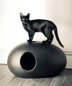 「cat toilet」の画像検索結果