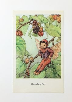 Mulberry Flower Fairy Picture, Vintage Bookplate, Flower Fairy, nursery art, Cicely Mary Barker