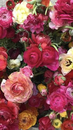 Beautiful Flowers Garden, Pretty Flowers, Fresh Flowers, Beautiful Gardens, Wholesale Flowers And Supplies, Flowers For Sale, San Diego, Florals, Wedding Flowers
