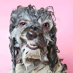 Sophie Gamand's Wet Dog