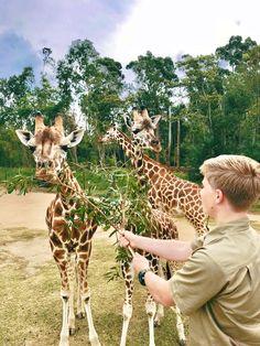 Robert Irwin and Giraffe calves at Australia Zoo Steve Irwin, Brisbane Australia, Australia Travel, Australia Zoo Animals, Irwin Family, Crocodile Hunter, Bindi Irwin, Save Wildlife, All Gods Creatures
