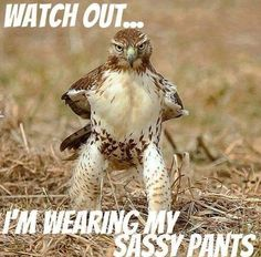 Watch out...I'm wearing my sassy pants