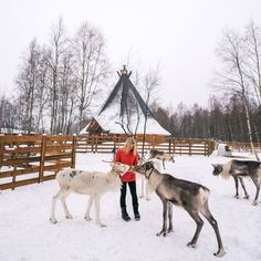 Dec 2018 - The complete travel guide to Lapland, Finland including hotels to see the northern lights, dog sledding, reindeer, snow-covered landscapes and more. Finland Trip, Finland Travel, Lapland Finland, Lappland, Cool Places To Visit, Places To Travel, Places To Go, European Road Trip, See The Northern Lights