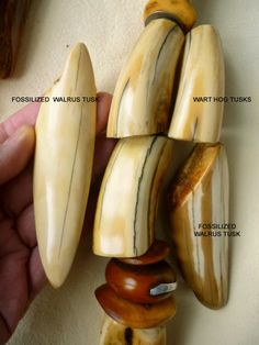 Warthog tusk vs Walrus tusk /and more ...( very interesting article !! to READ to learn more about the distinctive materials and ways to recognize them) more info about different ivories : http://www.fws.gov/lab/ivory_natural.php#warthog