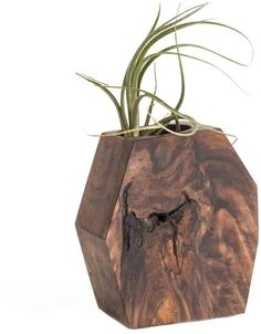 Geometric Wood Succulent or Tillandsia Planter  - Click link for product details :)