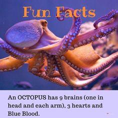 Fun Facts-Octopus