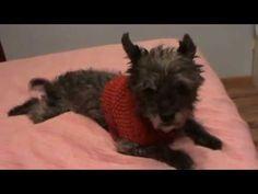 Abrigos para perritos tejidos en dos agujas en dos tallas! - YouTube